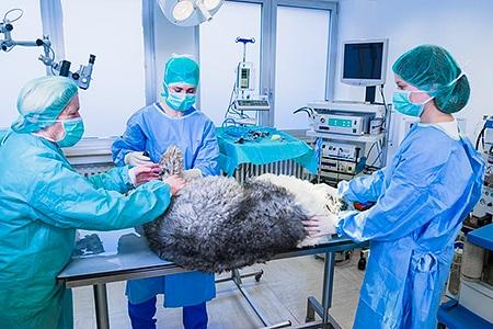 Hund auf dem OP-Tisch in der der Tierarztpraxis Besserer